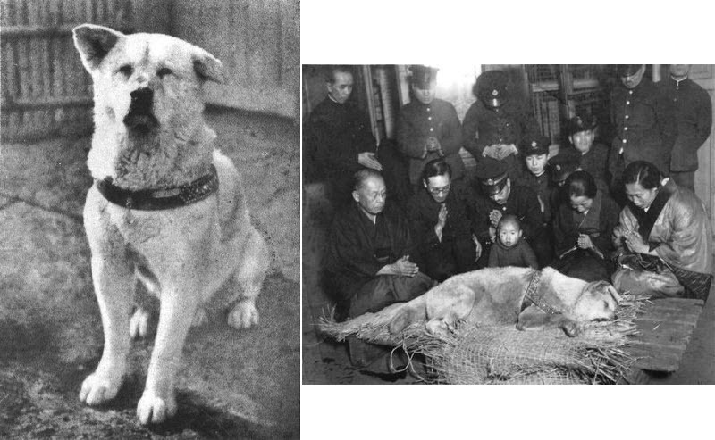 Featured image for The Loyal, Bear-Hunting Akita