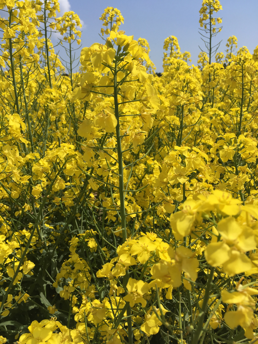 """Featured image for Canola Confession: On """"Mental Carrying Capacity"""", Currently Airing Series, and Balancing it All"""