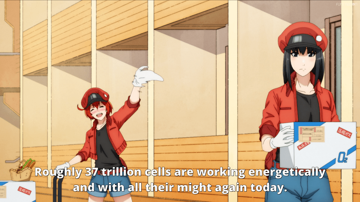 Featured image for First Impression: Cells At Work!! Season 2