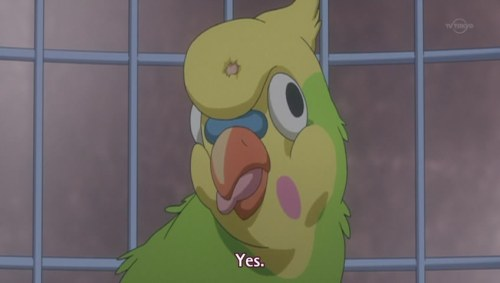Featured image for My anime blogging choices, let me show you them