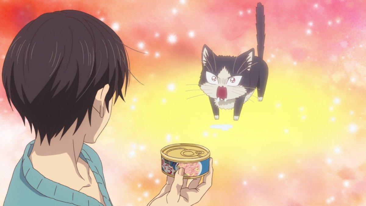 Featured image for Doukyonin wa Hiza, Tokidoki, Atama no Ue.(My roommate is a cat)- Anime Review