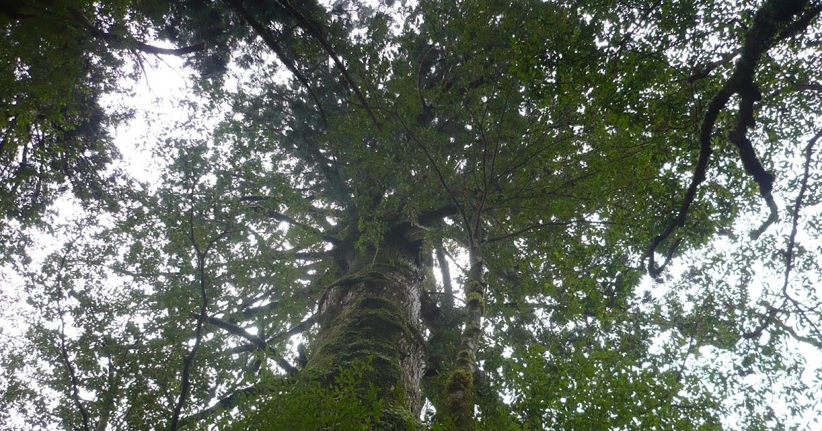 Featured image for Yakushima - Japan's Natural Treasure