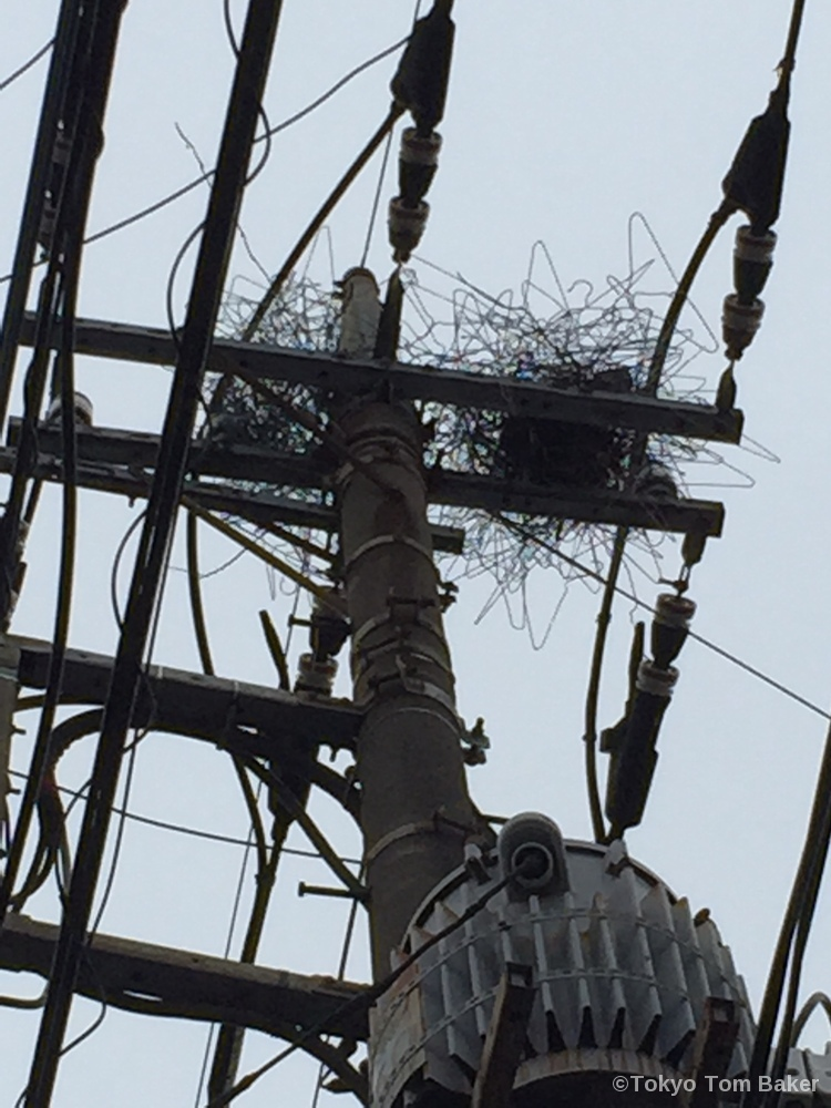 Featured image for On the ingenuity of Japanese crows