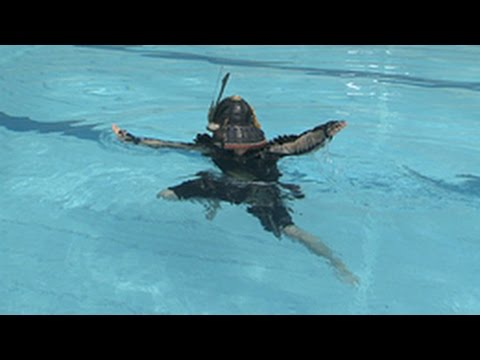 Featured image for I swim like a samurai (and didn't even know it)